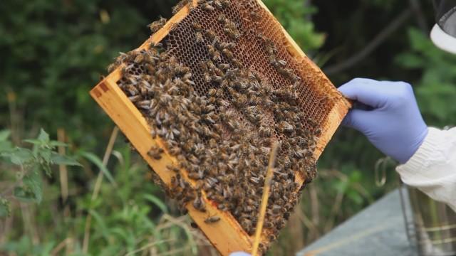 Maxine's Bees